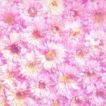 catalogue olfactif Euracli parfums fleurs