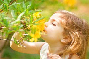 Catalogue olfactif Euracli : aromes, senteurs et parfums encapsules
